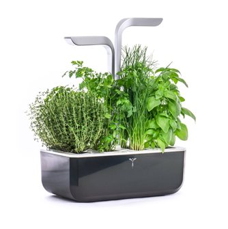 Smart Edition Smart Edition Indoor Garden Black Genuine Smart