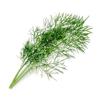 Dill reloading ingot for vegetable garden