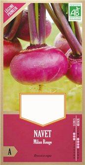 Purple Top Milan turnip seeds