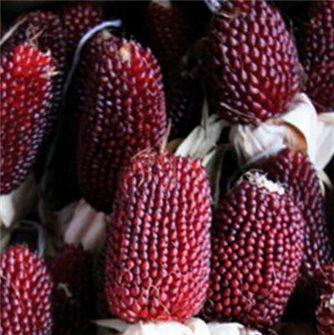Strawberry popcorn corn seeds (Red Strawberry)