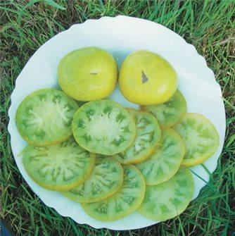 Evergreen tomato seeds